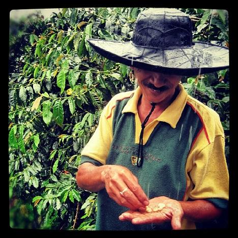 sumatra-coffee-mandheling-1
